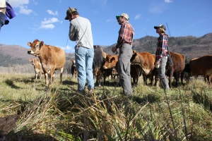Farmers inspect dairy pasture at James Ranch in Durango, Colo.
