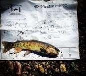 fishbib