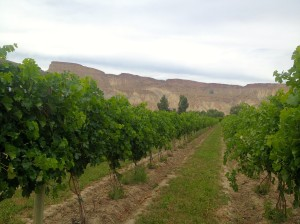 Red Fox Vineyard
