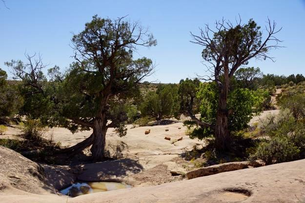 Water Pocket Rimrock above check dam